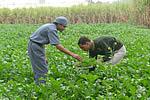 ヒマラヤ山麓 ハーブ無農薬